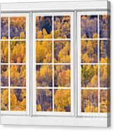 Autumn Aspen Trees White Picture Window View Canvas Print