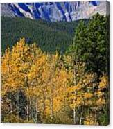Autumn Aspens And Longs Peak Canvas Print