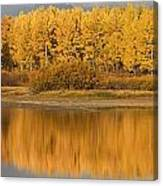Autumn Aspens Reflected In Snake River Canvas Print