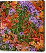 Autumn Asters Canvas Print