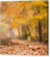 Autumn At Great Falls Canvas Print