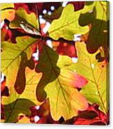 Autumn At Its Best Canvas Print