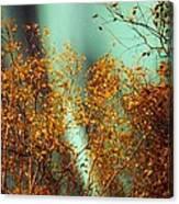 Autumn Aurora Canvas Print