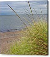Autumn Beach Grasses Canvas Print