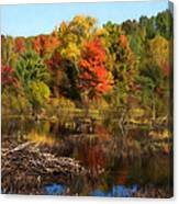 Autumn Beaver Pond Reflections Canvas Print