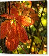 Autumn Begins 2 Canvas Print