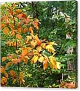 Autumn Begins At Breakheart Reservation Canvas Print
