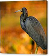 Autumn Blue Heron Canvas Print
