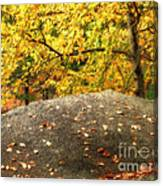 Autumn Boulder And Leaves Canvas Print