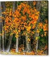 Autumn Breakout No.2 Canvas Print