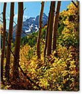 Autumn Brilliance 2 Canvas Print