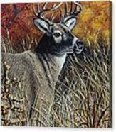 Autumn Buck Canvas Print