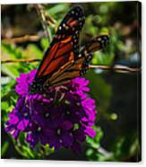 Autumn Butterfly Canvas Print