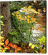 Autumn By A Pennsylvania Mountain Stream Digital Art Canvas Print