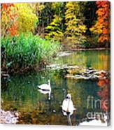 Autumn By The Swan Lake Canvas Print