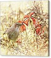 Autumn Catbird Canvas Print