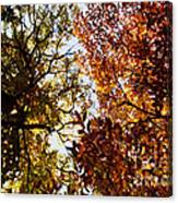 Autumn Chestnut Canopy   Canvas Print