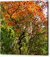 Autumn Color At Old Woman Creek 2 Canvas Print
