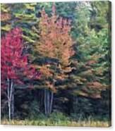 Autumn Color Painterly Effect Canvas Print