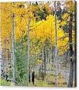 Autumn Colorado-1 Canvas Print