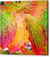 Autumn Colored Leaves Canvas Print