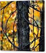 Autumn Colors 1 Canvas Print