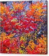 Autumn Colors - 113 Canvas Print