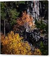 Autumn Colors 2 Canvas Print