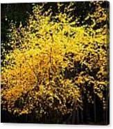Autumn Colors 4 Canvas Print