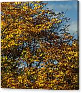 Autumn Colors 5 Canvas Print