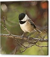 Autumn Colors Chickadee Canvas Print