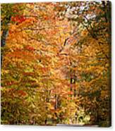Autumn Colors - Colorful Fall Leaves Wisconsin IIi Canvas Print