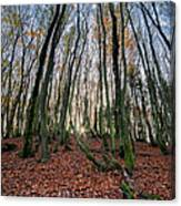 Autumn Colors In The Forrest Canvas Print