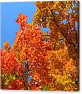 Autumn Contrasts Canvas Print