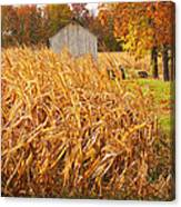 Autumn Corn Canvas Print
