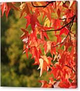 Autumn Cornered Canvas Print