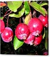 Autumn Crab Apples Canvas Print