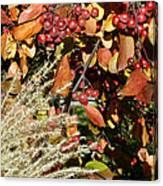Autumn Crabapples And Tall Grass Canvas Print