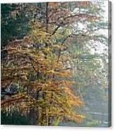 Autumn Cypress Canvas Print