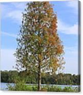 Autumn Cypress Tree Canvas Print