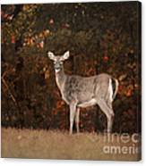 Autumn Doe Canvas Print