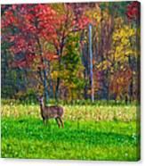 Autumn Doe - Paint Canvas Print