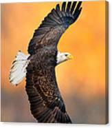 Autumn Eagle Canvas Print