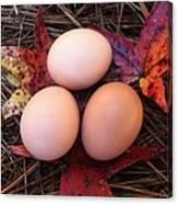 Autumn Eggs Canvas Print