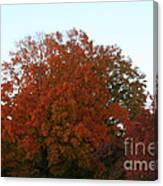 Autumn Eve Canvas Print