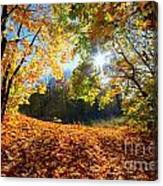Autumn Fall Landscape In Forest Canvas Print