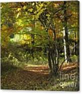 Autumn Feeling Canvas Print