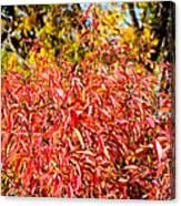 Autumn Flames Canvas Print