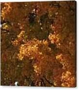 Autumn Foliage Canvas Print