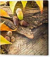 Autumn Forest Background Canvas Print